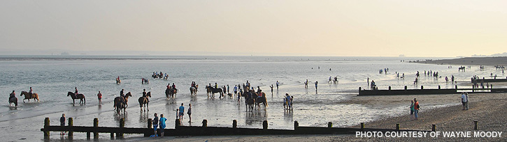 horses-beaches